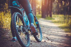 Cyclist riding mountain bike in the forest Stock Images