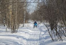 Cyclist riding on a mountain bike in the snow in the winter forest stock image