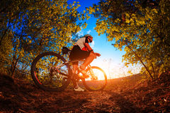 Cyclist riding mountain bike on trail at evening. Royalty Free Stock Image