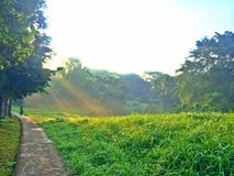 Cyclist riding next to Bidadari Forest, Singapore Royalty Free Stock Images