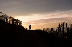Cyclist in sunset Royalty Free Stock Images
