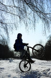 Cyclist wheelie silhouette. Silhouette of cyclist doing wheelie on snowy road, extreme winter cycling on mountain bike, tree branches and blue sky on background Royalty Free Stock Images