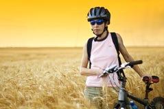 Cycliste dans le domaine de blé photo stock