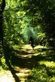 Cycliste de montagne dans le forrest Images libres de droits