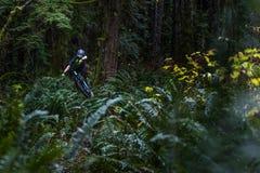 Cycliste de montagne sautant par des fougères Image libre de droits