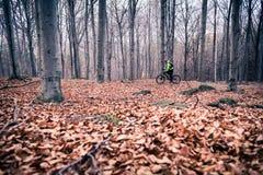 Cycliste de montagne sur la traînée de cycle en bois photo stock