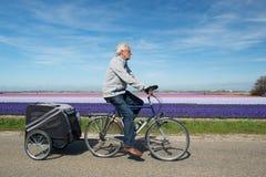 Cycliste en Hollande images libres de droits