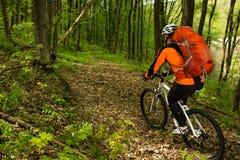 Cycliste montant le vélo dans la belle forêt de ressort Image stock
