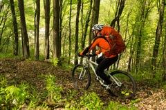 Cycliste montant le vélo dans la belle forêt de ressort Photographie stock libre de droits