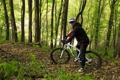 Cycliste montant le vélo dans la belle forêt de ressort Image libre de droits