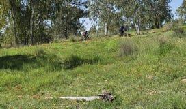 Cyclistes de montagne dans des Wildflowers de Negev photographie stock libre de droits
