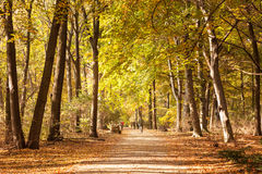 Cyclists in an autumn park Royalty Free Stock Photo