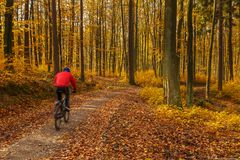 Cyclists on the forest path. Autumn in the forest. Tricity Lands. Cape Park, Gdansk, Poland Royalty Free Stock Image
