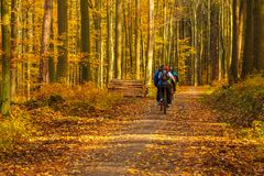 Cyclists on the forest path. Autumn in the forest. Tricity Lands. Cape Park, Gdansk, Poland Royalty Free Stock Photos