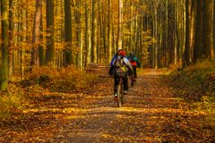 Cyclists on the forest path. Autumn in the forest. Tricity Lands. Cape Park, Gdansk, Poland Stock Photo