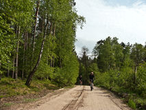 Cyclists in forest Stock Image