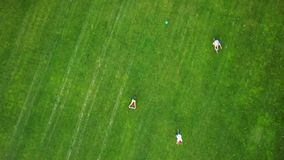Cyclists on a golf field, aerial view. Group of friends riding a bicycles on green meadow, shooting from a height with a drone stock video