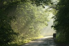 Free Cyclists Ride A Country Road Through The Spring Forest At Dusk After Rainfall Setting Sun Illuminates Oak Leaves On Branches Of Stock Images - 159691014