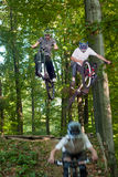 Cyclists rides through the forest Royalty Free Stock Photos