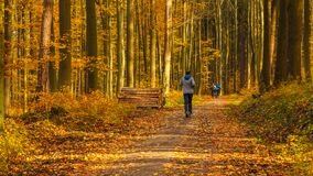 Cyclists and runner. Path in sunny autumn forest. Tricity Landsc. Ape Park, Gdansk, Poland Stock Photos