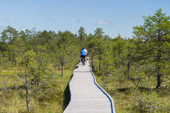 Cyclists on wooden hiking trail of bog area Stock Images