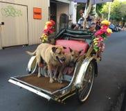 Cyclo dragende honden op straat in Georgre-Stad, Penang, Maleisië stock fotografie