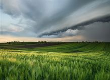 Cyclone on the field. Beautiful natural landscape in the summer time Stock Photography