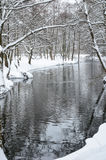Cycloondaniella gebrachte sneeuwval Royalty-vrije Stock Foto's