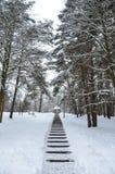 Cycloondaniella gebrachte sneeuwval Royalty-vrije Stock Afbeeldingen