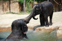 Cyfrowej fotografii tło słonia dziecko I mama Fotografia Stock