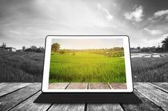 Cyfrowej pastylka na drewnianej teksturze przy rolniczym zieleni polem w wschodzie słońca, zdjęcia royalty free
