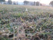 cyfrowo wytwarzający trawy wizerunku świat obrazy stock