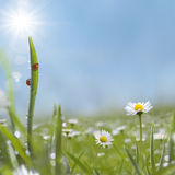 Słodka trawa Zdjęcie Stock