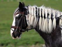 Cygański koń Zdjęcie Stock