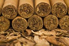 Cygara na tytoniu Fotografia Royalty Free