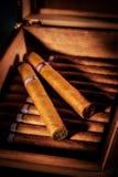 Cygara w humidor Zdjęcia Royalty Free