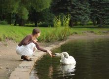 Cygne alimentant de femme Photographie stock