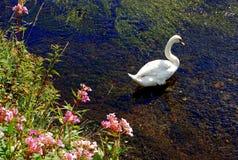 Cygne avec des fleurs Images libres de droits