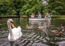 Cygne, canards et bateau Image libre de droits