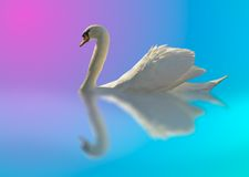 Cygne dans des couleurs lumineuses Photo stock