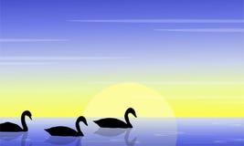 Cygne de beauté sur la silhouette de paysage de lac Image stock