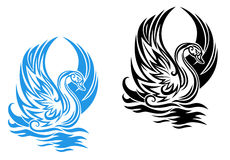 Cygne de natation Photos libres de droits