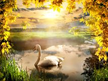 Cygne en automne image libre de droits