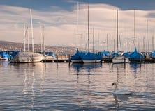 Cygne et bateaux sur le lac images libres de droits