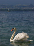 Cygne et yacht blancs Photographie stock libre de droits