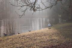 Cygne regardant des canards dans l'étang Photographie stock libre de droits
