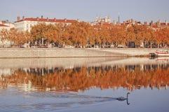 Cygne sur le fleuve de Rhône à Lyon Photos stock