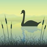 Cygne sur le lac illustration stock