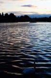Cygne sur le lac dans le lac hyde Park, Londres photographie stock libre de droits
