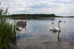 Cygne sur un lac Images libres de droits
